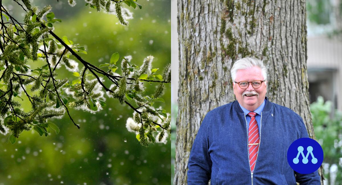 Eriksson (M) vill ha svar om pollenmätning i norra Sverige kommer återupptas