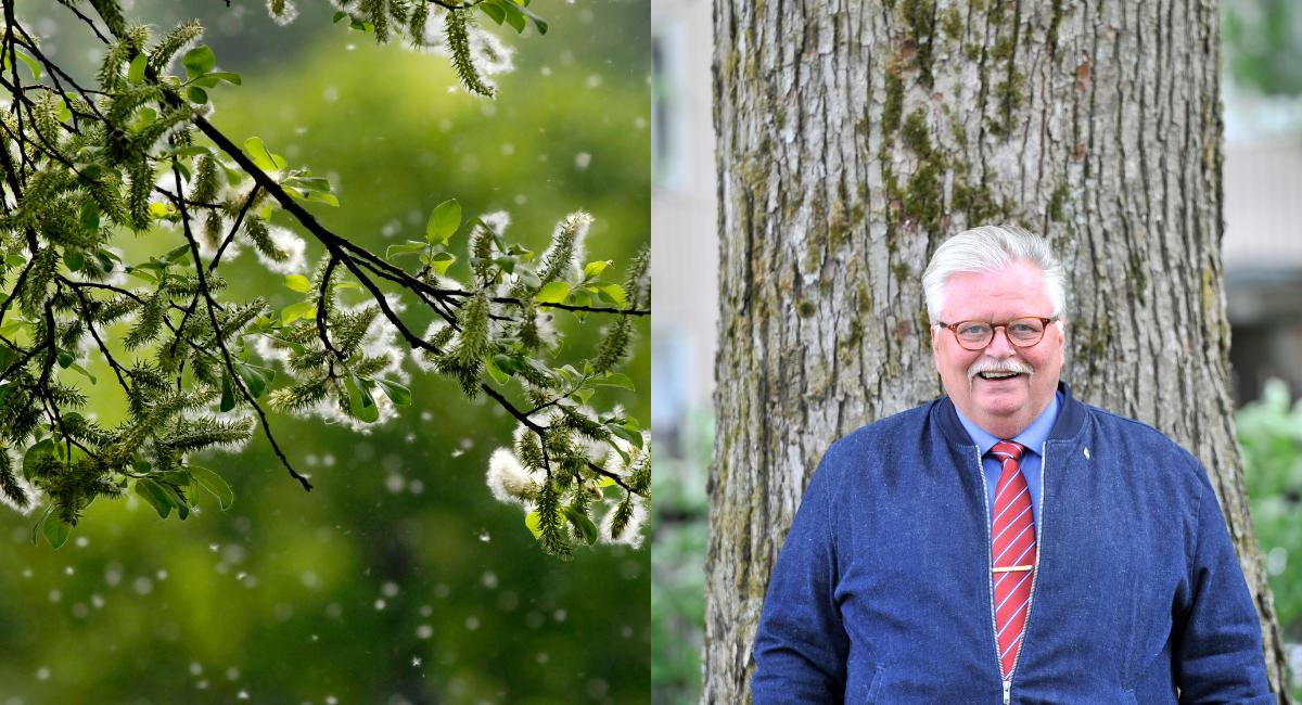 M-kritik när S-ledda region Västerbotten inte är intresserad av att fortsätta med pollenmätningar